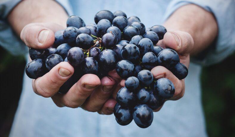 Serena Wines, storia di tradizione e passione della rinomata azienda vinicola